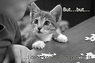 Puzzled-kitty