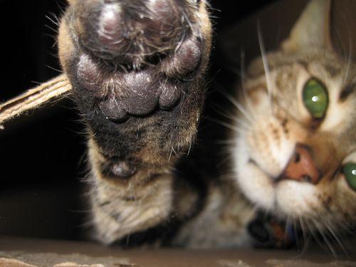 Kitty_2458