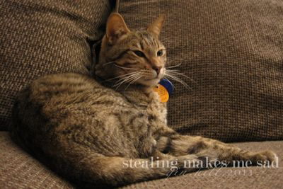 Kitty_2361