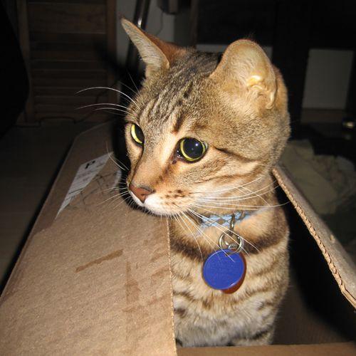 Kitty_2454