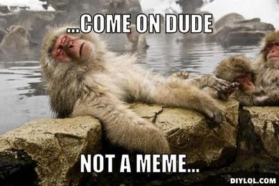 Damm-monkey-meme-generator-come-on-dude-not-a-meme-4a13be