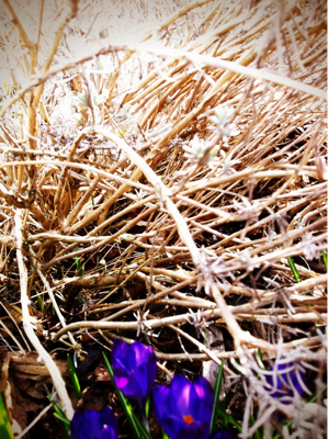 smells like spring spirit